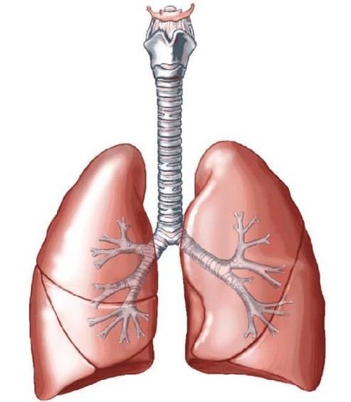 非小细胞肺癌分类